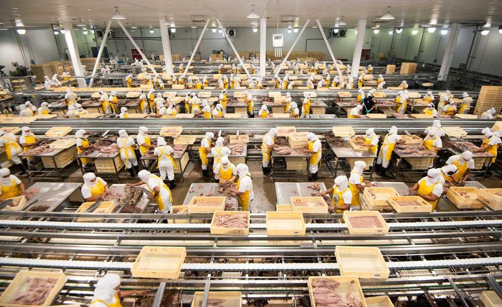 Trabajadores de Alimentos Pro Salud en operación previo al inicio de la pandemia.