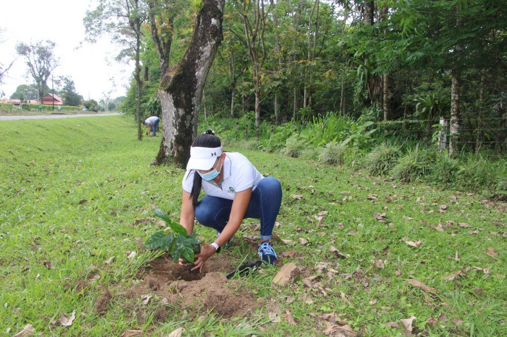 Para la empresa Ecoquintas la plantación de árboles es la herramienta más eficaz y sostenible en la lucha contra el cambio climático.