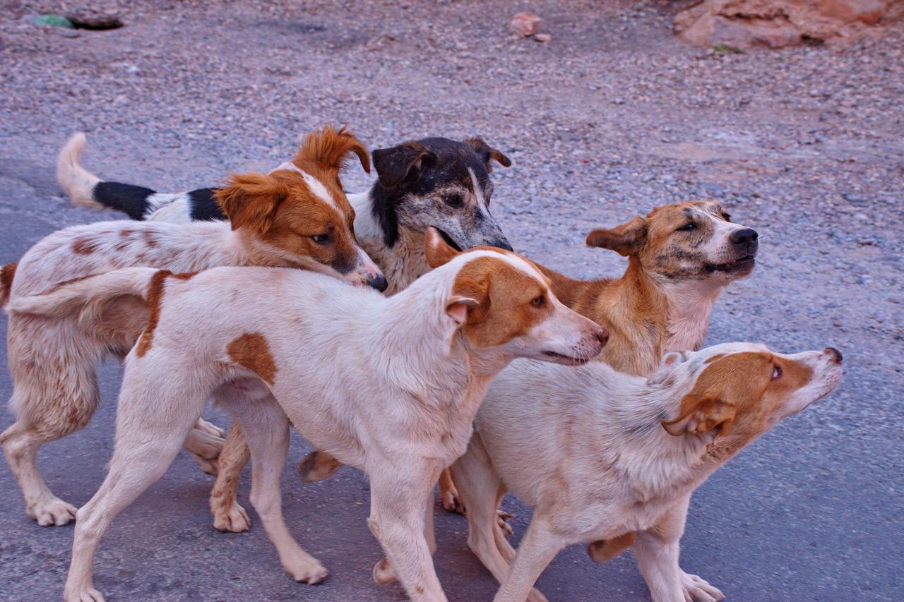 Se estima que, en Costa Rica, casi el 15% de los perros con hogar fueron rescatados de las calles.